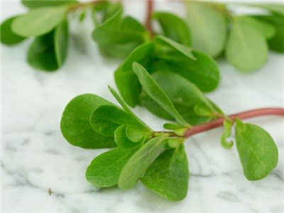 Green Purslane  - Heirloom Vegetable - Portulaca oleracea - 100 Seeds