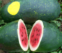 Moon and Stars Yellow Watermelon  - Heirloom Vegetable / Fruit - Citrullus lanatus - 5 Seeds