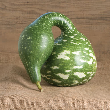 Speckled Swan Gourd  - Heirloom Vegetable - Lagenaria siceraria - 5 Seeds