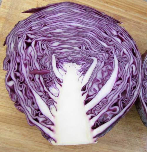 Red Amarant Cabbage - ORGANIC - Heirloom Vegetable - 20 Seeds