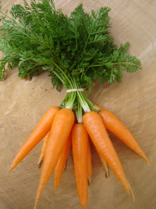 Dulcina Nantes Carrot - ORGANIC - Heirloom Vegetable - 200 Seeds