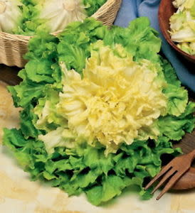 Bubikopf Endive / Escarole - ORGANIC - Heirloom Vegetable - 100 Seeds