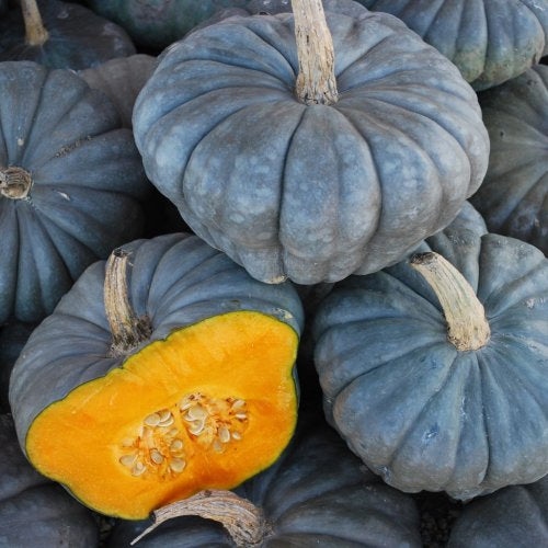Queensland Blue  Pumpkin - ORGANIC - Heirloom Vegetable - 5 Seeds