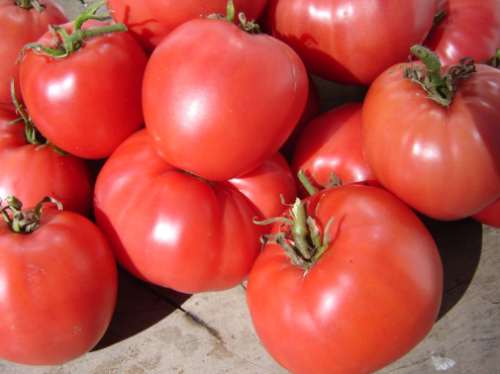 Coeur de Boeuf Tomato - ORGANIC - Heirloom Vegetable - 20 Seeds