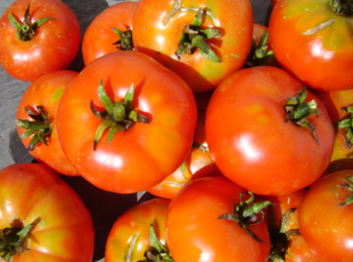 Marmande Tomato - ORGANIC - Heirloom Vegetable - 20 Seeds