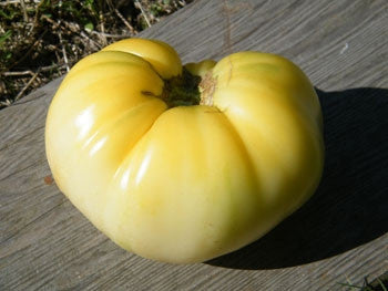 Great White Beefsteak Tomato - Lycopersicon Esculentum - 10 Seeds