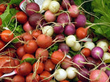 Easter Egg Radish - Raphanus Sativus - 100 Seeds- ORGANIC