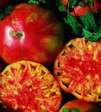 Hillbilly Tomato - Lycopersicon Esculentum - 5 Seeds