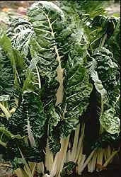 Fordhook Giant Swiss Chard - Beta Vulgaris var. cicla - 50 Seeds
