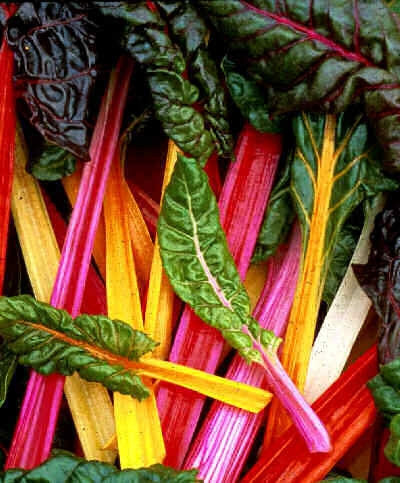 Bright Lights Swiss Chard - Beta Vulgaris var. cicla - 15 Seeds