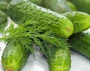 Boston Pickling Cucumber - Cucumis Sativus - 20 Seeds