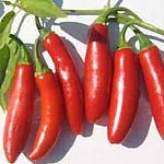 Serrano Chilli Pepper - Capsicum Annuum - 30 Seeds