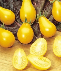 Yellow Pear Tomato - ORGANIC - Lycopersicon Lycopersicum - 40 Seeds