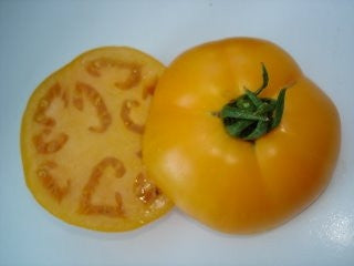 Golden Jubilee Tomato - Lycopersicon Esculentum - Vegetable - 10 Seeds