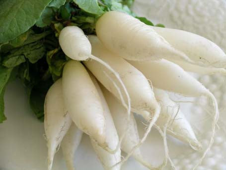 White Icicle Radish - Raphanus Sativus - Vegetable - 50 Seeds - ORGANIC