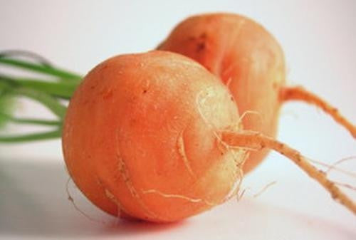Parisian Carrot - Vegetable - Daucus Carrota - 100 Seeds
