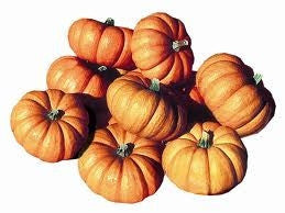 Jack be Little Pumpkin - Vegetable - Cucurbita Maxima - 5 Seeds
