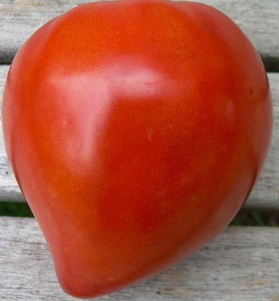 Bulls Heart Tomato - Lycopersicon Esculentum - Vegetable - 10 Seeds