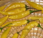 Aji Lemon Pepper - Capsicum Annuum - Chilli Pepper - 5 Seeds