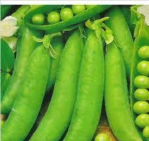 Greenfeast Peas - Pisum Sativum - Vegetable - 25 Seeds