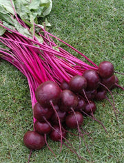Beetroot Crimson Globe - Beta Vulgaris - Vegetable - 100 Seeds
