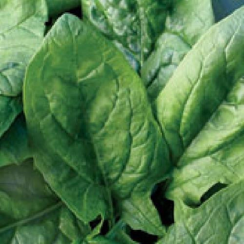 Viroflay Spinach - Spinacia Oleracea - Vegetable - 150 Seeds