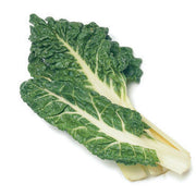 Lucullus Swiss Chard - Beta Vulgaris - Vegetable - 60 Seeds