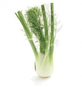 Sweet Florence Fennel - Foeniculum Vulgare - Culinary Edible Herb - 200 Seeds