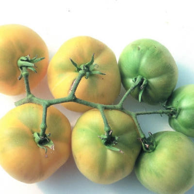 Garden Peach Tomato - Lycopersicon Esculentum - Heirloom Tomato - 5 Seeds