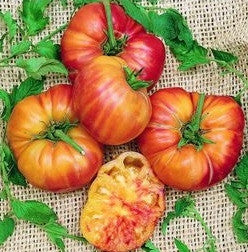 Old German Tomato - Lycopersicon Esculentum - Organic Heirloom Vegetable - 10 Seeds