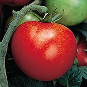 Thessaloniki Greek Tomato - Heirloom Vegetable - 5 Seeds