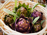 Purple Romagna Artichoke - Heirloom Vegetable - 5 Seeds