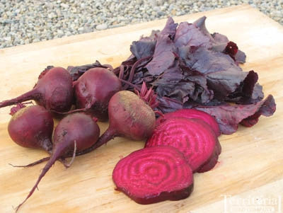 Bulls Blood Beetroot - Heirloom Vegetable - 50 Seeds