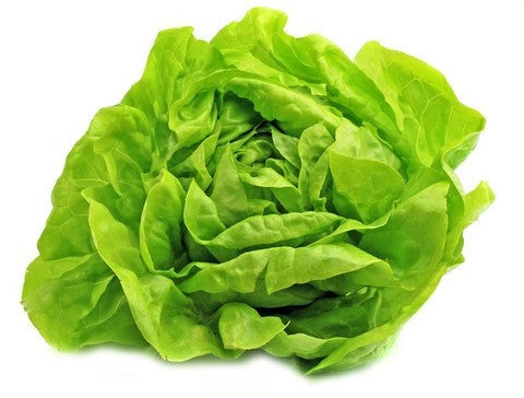 Buttercrunch Butterhead Lettuce - ORGANIC - Heirloom Vegetable - 100 Seeds