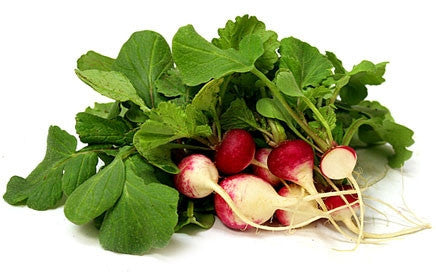 Sparkler Radish - ORGANIC - Heirloom Vegetable - 100 Seeds