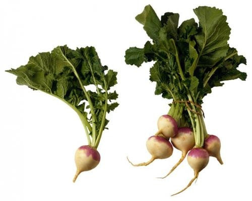 Purple Top White Globe Turnip - ORGANIC - Heirloom Vegetable - 200 Seeds