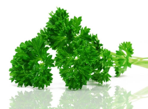 Curly Parsley - ORGANIC - Herb - 150 Seeds