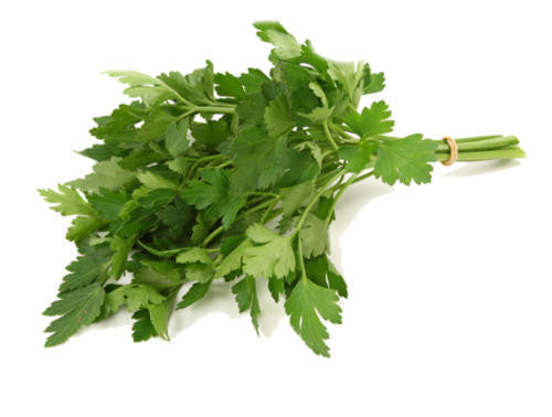 Flat Leaf Parsley - ORGANIC - Herb - 150 Seeds