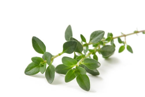 Thyme - ORGANIC - Herb - 100 Seeds