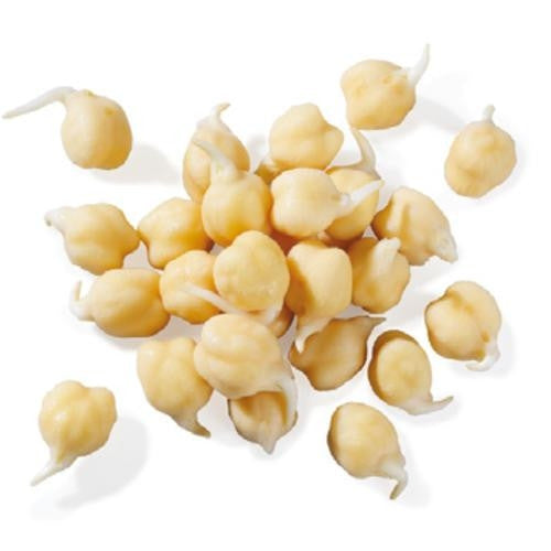 White Chickpea - ORGANIC - Sprouting Seeds