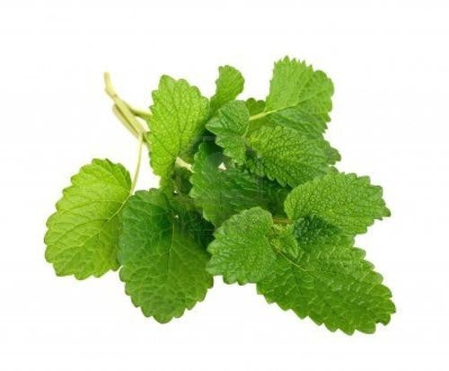 Lemon Balm - ORGANIC - Herb - 60 Seeds