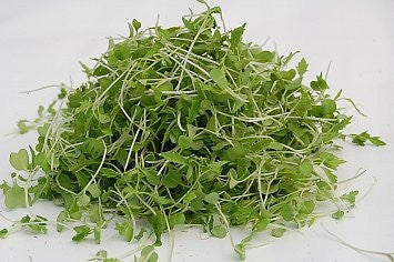 Chinese Cabbage - Sprouting / Microgreen Seeds