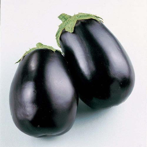 Black Beauty Eggplant - Bulk Vegetable Seeds - 100 grams