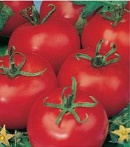 Heinz 1370 Tomato - Bulk Vegetable Seeds - 20 grams