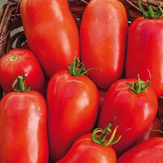Roma VF Tomato - Bulk Vegetable Seeds - 20 grams