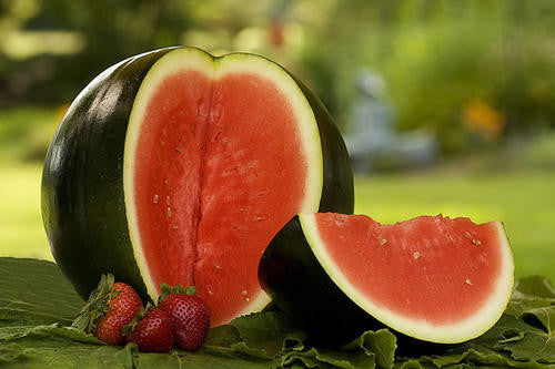 Sugar Baby Watermelon - Bulk Fruit Seeds - 50 grams