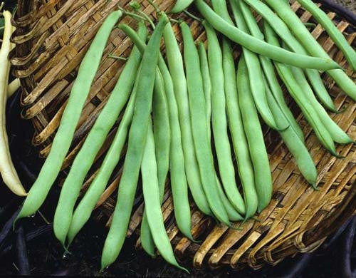 Lazy Housewife Beans - Bulk Vegetable Seeds - 200 grams