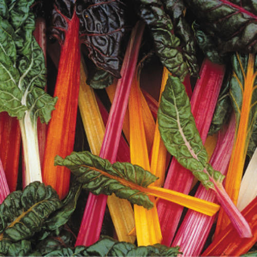 Bright Lights Swiss Chard - Bulk Vegetable Seeds - 20 grams