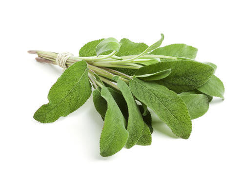 Sage - Bulk Herb Seeds - 10 grams