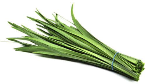 Garlic Chives - Bulk Herb Seeds - 20 grams